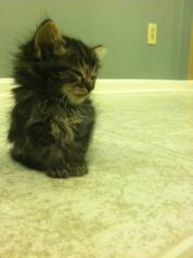 Here's a kitten. I love it.
